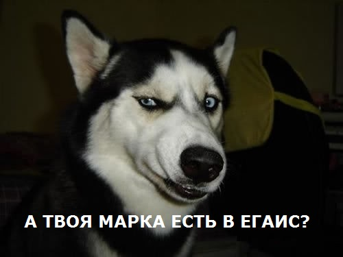 Собака подозревака.jpg
